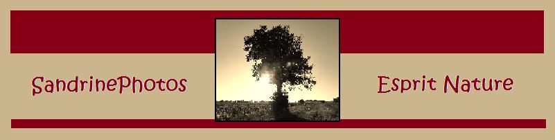 Bannière SandrinePhotos Esprit Nature, Page d`accueil, Site de photographie amateur Nature et Patrimoine local, Bouresse, Poitou-Charentes