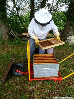 Essaimage du vendredi 11 mai 2012 avec M.Philippe Giraud apiculteur à Bouresse-Poitou-Charentes Préparation de la nouvelle ruche (23)