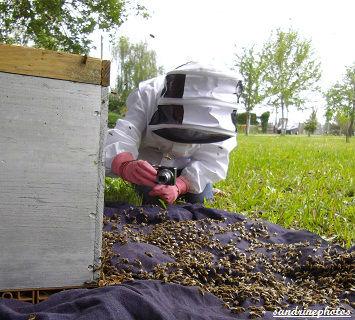 Essaimage du vendredi 11 mai 2012 avec M.Philippe Giraud apiculteur à Bouresse-Poitou-Charentes Sandrine photographe-apicultrice