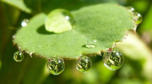 Feuille sous la pluie gouttes d`eau aux reflets de la nature