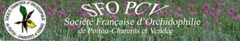 jpg_SFO-PCV-Bannière Société Française d`Orchidophilie Poitou-Charentes et Vendée