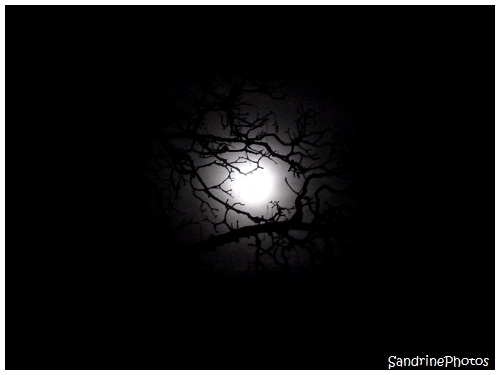 L`oeil de la nuit, The eye of the Night, The Moon through the branches of a tree, La Lune à travers les branches d`un arbre, Bouresse, Poitou-Charentes, SandrinePhotos (2)