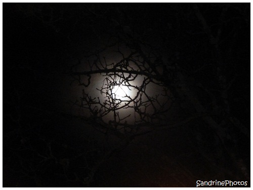 L`oeil de la nuit, The eye of the Night, The Moon through the branches of a tree, La Lune à travers les branches d`un arbre, Bouresse, Poitou-Charentes, SandrinePhotos (3)