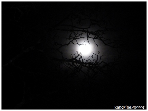 L`oeil de la nuit, The eye of the Night, The Moon through the branches of a tree, La Lune à travers les branches d`un arbre, Bouresse, Poitou-Charentes, SandrinePhotos (4)