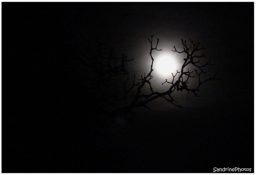 L`oeil de la nuit, The eye of the Night, The Moon through the branches of a tree, La Lune à travers les branches d`un arbre, Bouresse, Poitou-Charentes, SandrinePhotos Esprit Nature