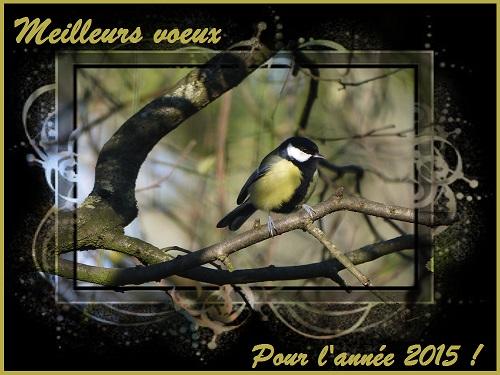Meilleurs voeux pour l`année 2015, Mésange charbonnière, Oiseaux des jardins, Birds of the garden, Bouresse, Nature en France