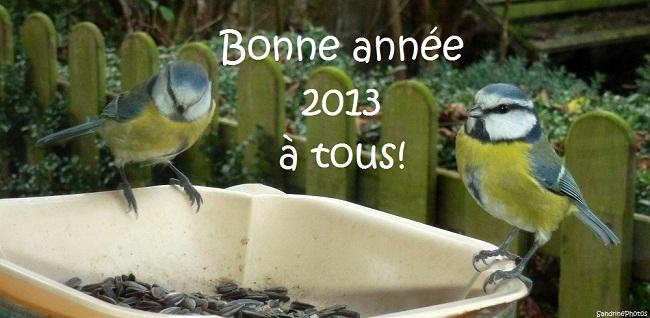 mésanges bleues vous souhaitant une très bonne année 2013, blue tits wishing you a happy new year, oiseaux de nos jardins, birds of the gardens, 31 décembre 2012 Bouresse Poitou-Charentes