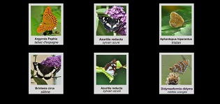 Papillons de Dordogne et d`Aquitaine